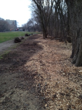 After cleanup and removal of invasive species, the new grass line is established with mulch.