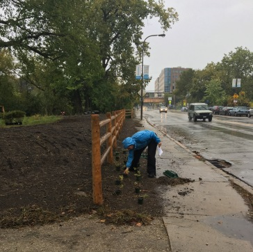 canalshores12-nativeplantplacement_101216